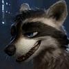 furry raccoon