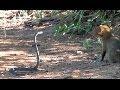 Мангуст против черной мамбы,Entertainment,Дикие животные,Лев нападает на людей,Дикие животные атакуют,Кобра,Крокодил,Слон,Большие кошки,Гепард,Гиена,Гиппопотам,Ягуар,Лев,Леопард,Обезьяна,Медведь,Тигр,Нападения животных,Лев нападает на женщину,Лев против гиены,Лев нападает на человека,Лев нападает на